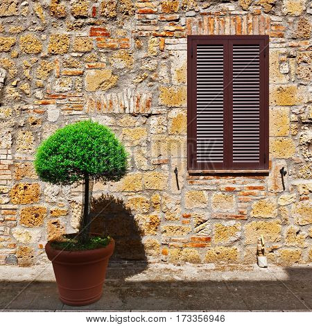 Ornamental Tree on the Background of the Facade of Italian House
