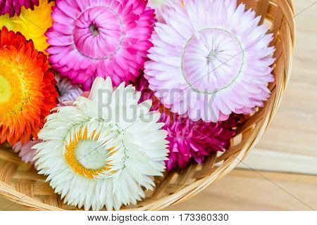 Beautiful strawflowers on bamboo basket on wooden table