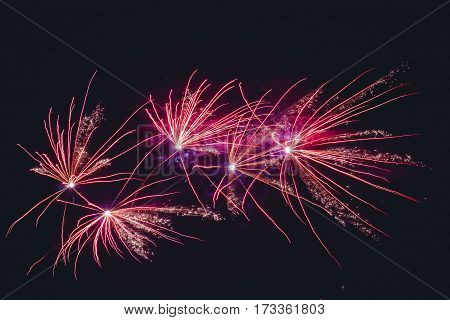 Fireworks Exploding In Violet Colors