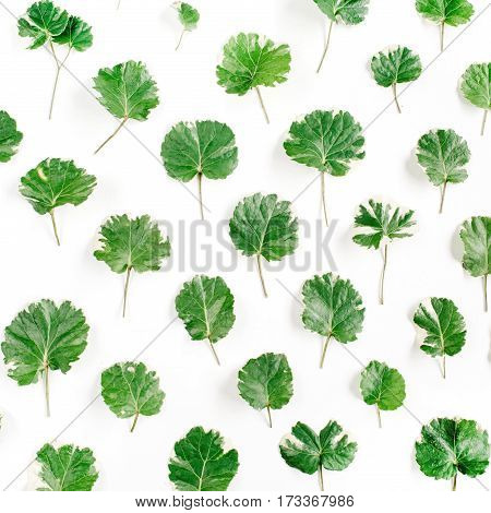Floral pattern made of green leaves branches on white background. Flat lay top view. Leaf pattern texture.