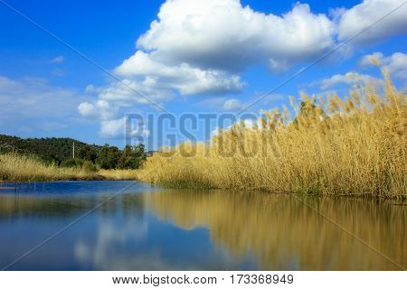 Morning landscape with river and reeds on the beach