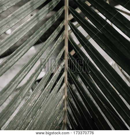 Green Tropical palm branch. Minimalistic floral background.