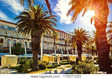 Split Main Waterfront Walkway Palms And Architecture