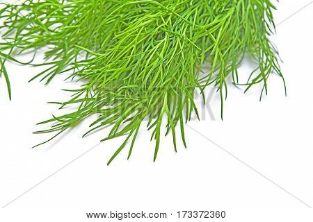green dill leaves over a white background