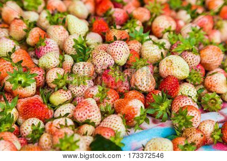 Spread Of Strawberry After Harvest In The Morning