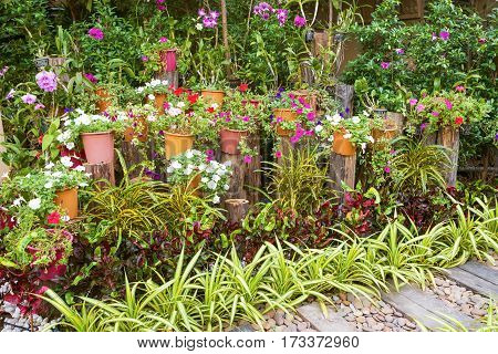 Summer garden with a variety of flowering plants
