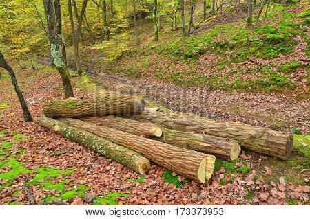 cut tree logs in the forest deforestation