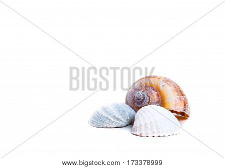 colored aquarium seashells isolated on white background