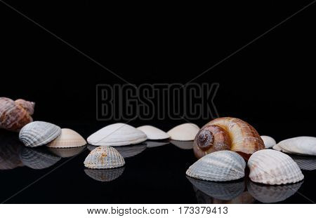 colored aquarium seashells on glossy surface and black background
