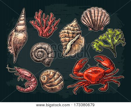 Set sea shell, coral, crab and shrimp. Vector color engraving vintage illustrations. Isolated on dark background.