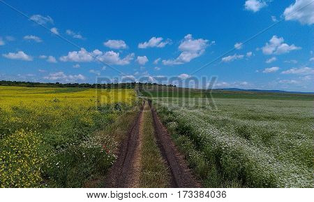 rural road among endless summer blossoming field