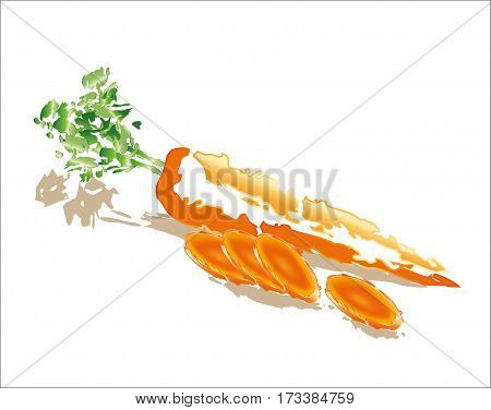 Raw carrot and slices on white backgound