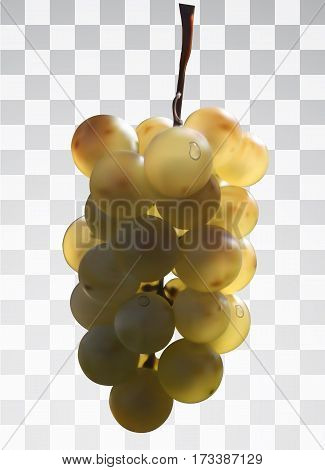 Realistic bunch of grapes on a transparent background. Juicy bunch of grapes in the sun with dew drops. Vector illustrations. Realistic 3d vector object. 10 EPS