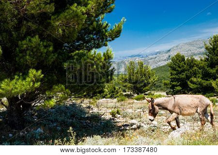 Dubornik Mountains walk Donkey my ideal model