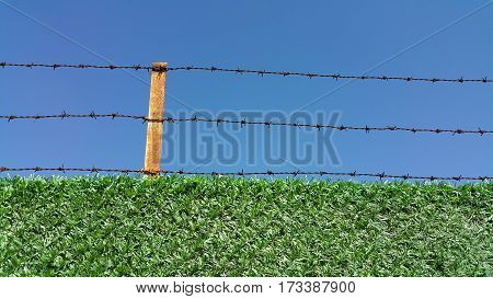 Barbed Wire Fence On A Blue Background