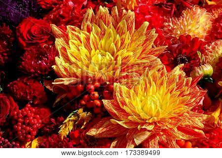 two red yellow flowers fest romantic nice