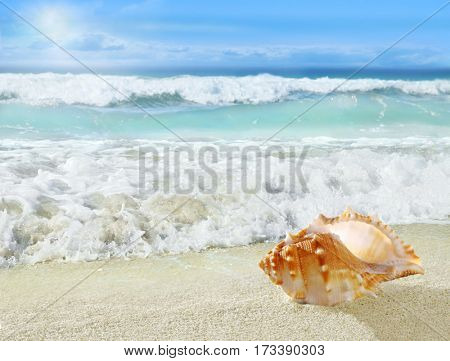 Shell on the beach.
