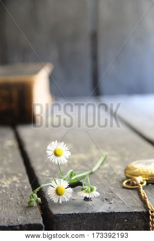 Daisies and pocket watch on a vintage background