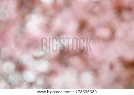 Blooming tree with the pink flowers outdoors