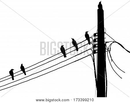 Silhouette of a crow on pillar electric line
