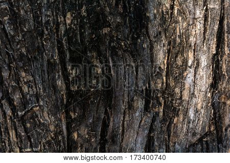 Tree Bark Background And Texture