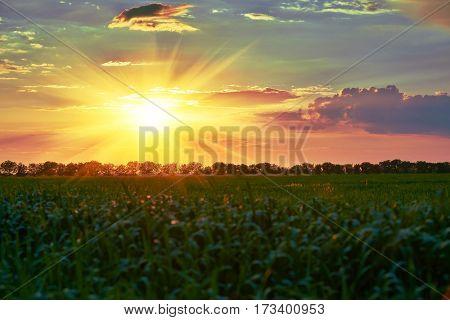 Beautiful sunset in spring. Green field, wild landscape. Big sun in cloudy sky. Tree silhouette.