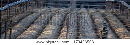 Panoramic image of a Wisconsin ginseng field with posts, wire and shade rolled up.