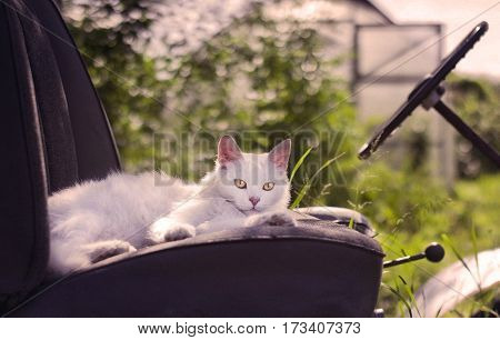 White cat lying on the driver's seat of the tractor