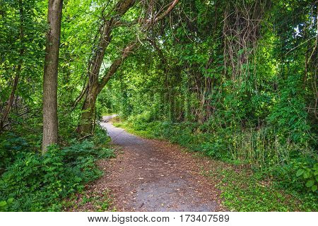 Dense forest greenery along this nature trail in Central New Jersey.