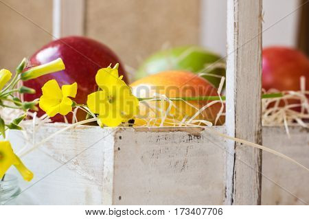 Colorful ripe red yellow apples pears in vintage wood box summer flower fruits in basket outdoors garden defocused background close up