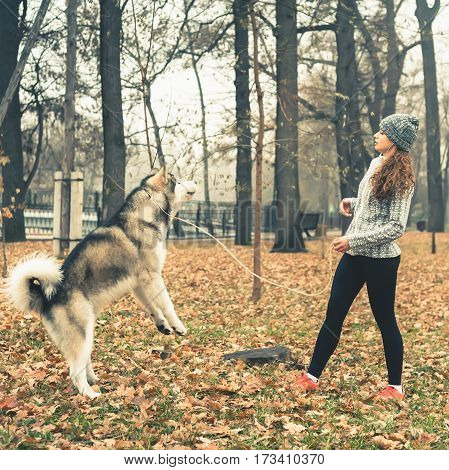 Image of young girl playing with her dog, alaskan malamute, outdoor at autumn or winter. Healthy activity with your domestic pet. Husky