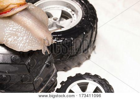 Beautiful snail on black wheel. Macro shot.