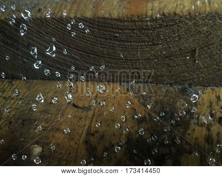 natural texture Dew drops on the Web