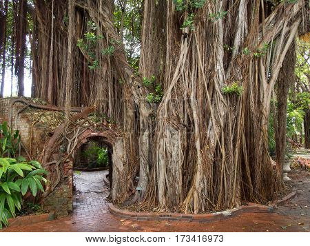 Vines growing over a Brick Entrance in a Park in Key West Florida