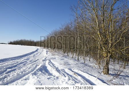 Bald Trees And Skid Marks Into A Snowscape