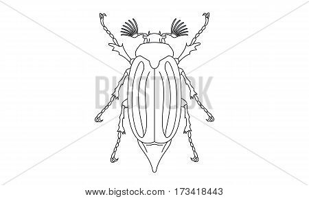 Pictogram - Chafer Cockchafer Maybug May beetle Bug Insect - Object Icon Symbol