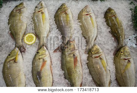 Fresh sea fish on ice with lemon cut. Red drum or redfish catch for dinner. Red fish in marketplace. Selling fish in grocery store or fish shop. Middle size sea fish with red fins and tail. Raw fish