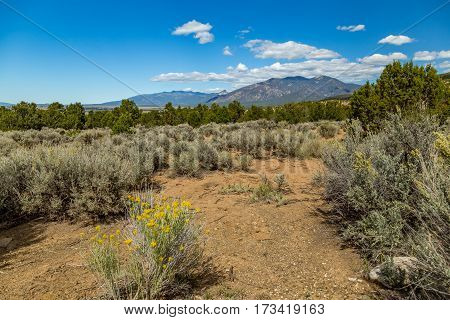 A View of a portion of the Kit Carson National Forest in the foothills of the Sangre de Cristo Mountains south Taos New Mexico.