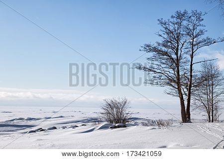 Gulf of Finland in winter on a sunny day. Winter landscape