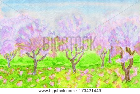 Spring landscape, garden with trees in blossom of pink colour, hand painted picture, watercolours. Size of original 29, 5 x 20 sm.