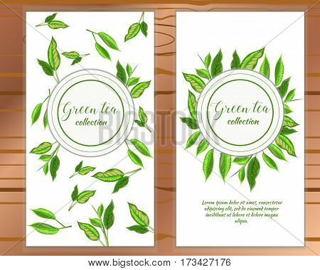 Vector Vertical Green Tea Banner With Tea Leaves On White Backgroud. Design For Packaging, Tea Shop,