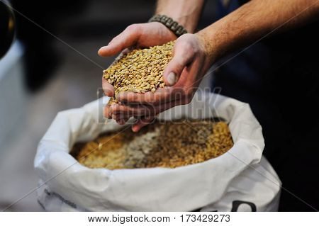 malt grain close-up in the men's hands. brewing