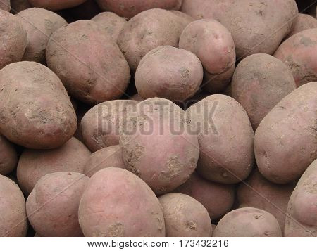 potatoes on the market for sale as a background. Selective focus.