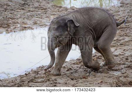 Cute baby elephants walking in mug near puddle