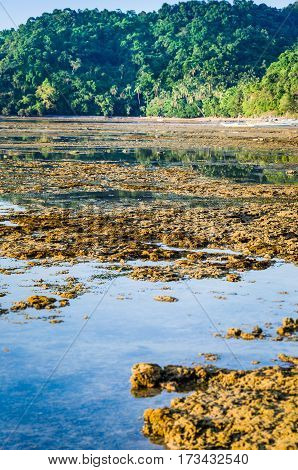 Beautiful Reflection of Jungle in Water on Low Tide, El Nido, Palawan, Philippines.