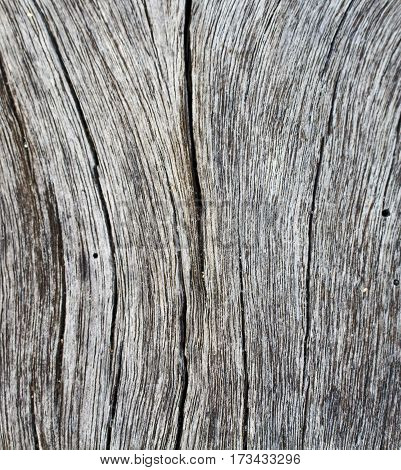 Vertical cracks on wooden texture closeup photo. White and grey wood background. White old tree near the sea. Curves and lines on rustic timber. Rough timber texture. Sea wood backdrop. Seawood photo