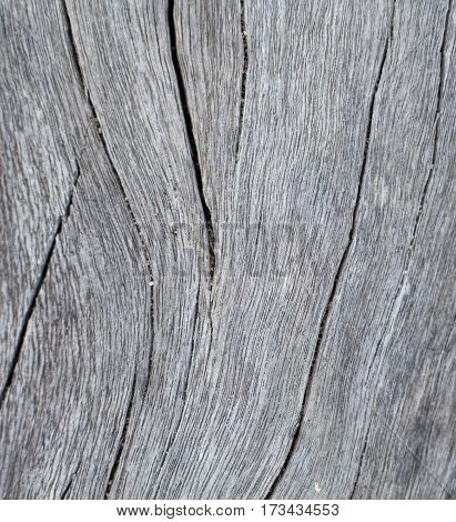 Vertical timber texture close up photo. Monochrome wood background. White old tree near the sea. Curves and lines on rustic timber. Rough timber texture. Shabby wood backdrop. Weathered seawood banner
