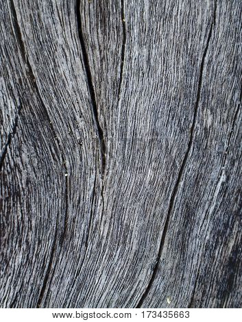 Vertical wooden texture close up photo. White and grey wood background. White old tree near the sea. Curves and lines on rustic timber. Rough timber texture. Seawood backdrop. Old weathered tree image