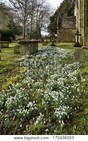 Snowdrops At St. Marys Norman Church, Beverston