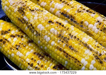 Closeup of buttered yellow grilled corn on the cob.